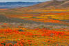 20190413_Antelope Valley Poppy Reserve_6955