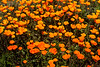 20170312_SoCal Spring Flowers_0709