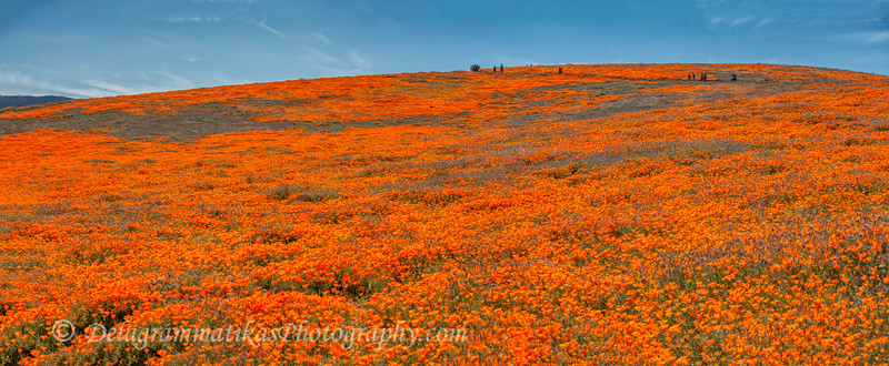 20190413_Antelope Valley Poppy Reserve_6923