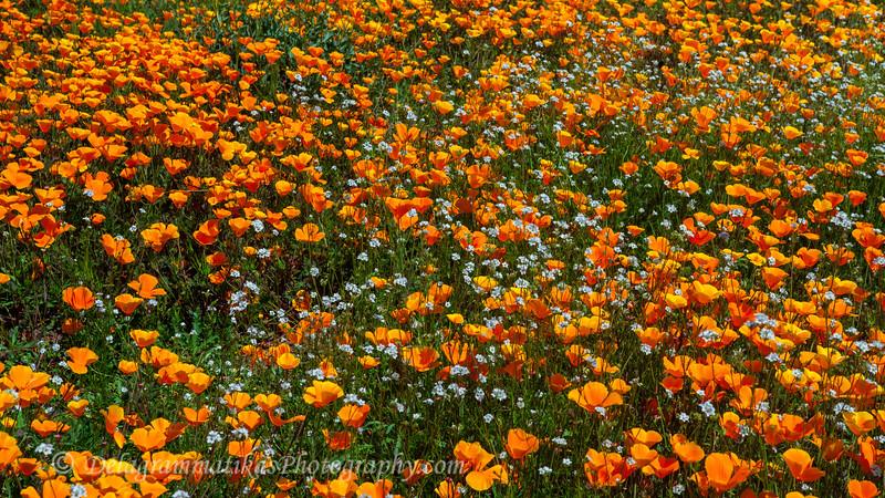 20170314_SoCal Spring Flowers_0854