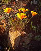 20170312_SoCal Spring Flowers_0789