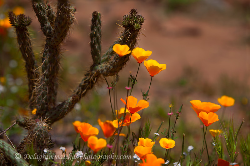20170314_SoCal Spring Flowers_0838