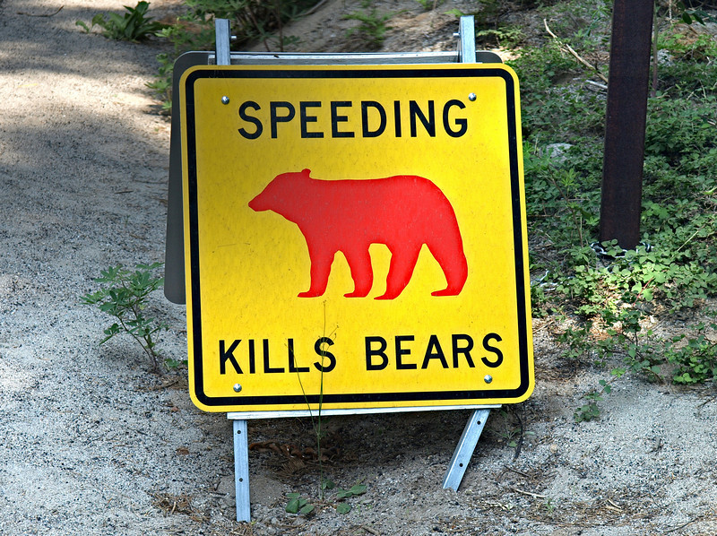 You see these signs any place a bear has been hit by a car.