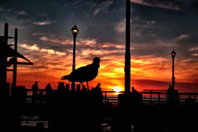 2016 California trip -Redondo Pier - Redondo Beach