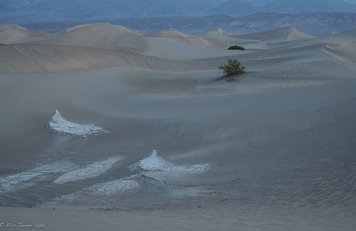 Dunes at Dawn, Death Valley