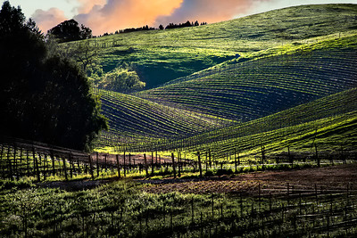 Richards___Vineyard Hills