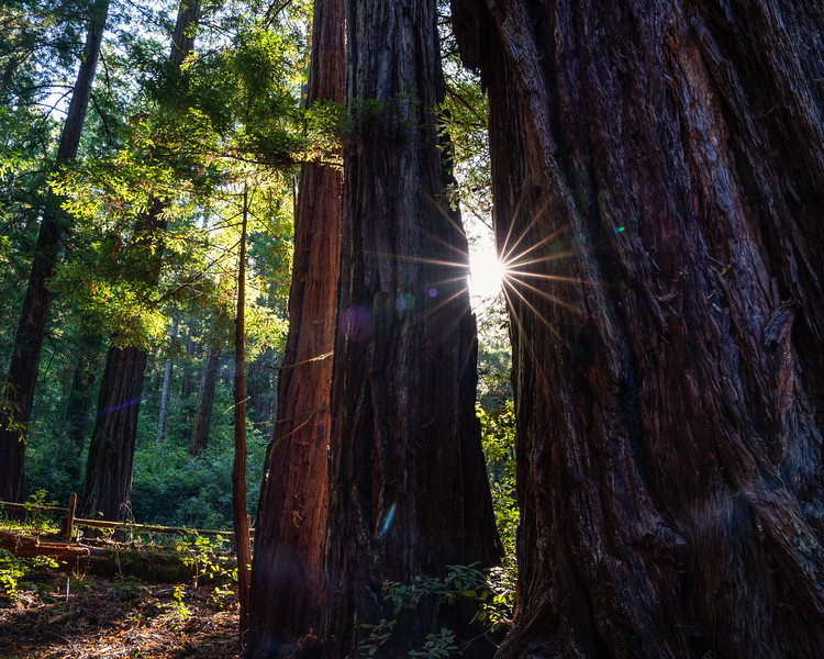 BIG BASIN SUNRISE | BIG BASIN REDWOOD STATE PARK - CALIFORNIA