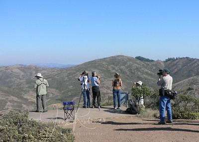 "There we were, at the top of the hill, waiting for hawks of all kinds to dive-bomb us so that we could take many clos-up BIFs. (The rest of the folks were there to count, and they were perfectly fine with a distant glimpse of a ""juvenile sharpie"" a mile or two away.)"