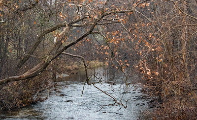 A creek on a rainy winter day