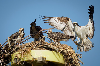 Overflowing nest with five occupants!