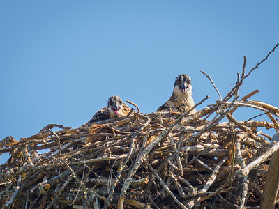 Finally this nest has succeeded!