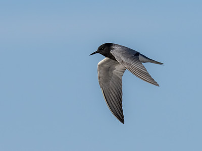 """These common birds are in """"steep decline"""" according to the experts."""
