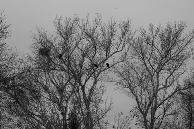 TVs in trees on a dark day in B&W