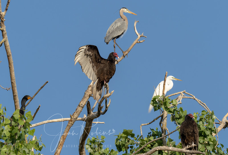 Rookery Gathering by Joan