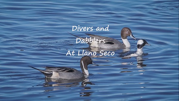 Divers and Dabblers