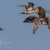 Pintails Llano Seco