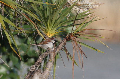 Color coordinated Finch