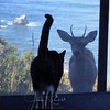 Cat meets Deer at Irish Beach