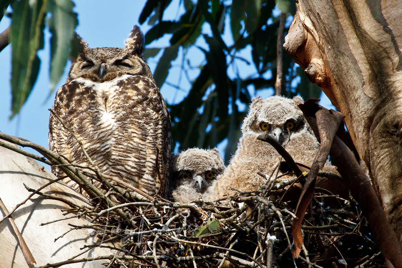 A family portrait, San Rafael, California
