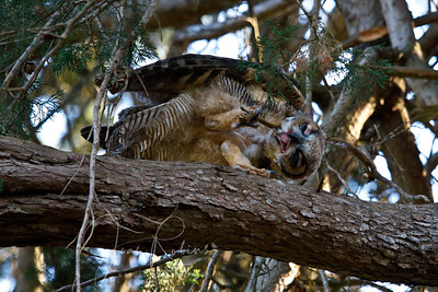Chick playing with a thin branch gets a strangle hold