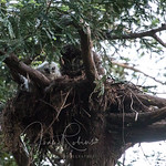 Joan Robins' photo