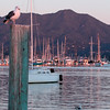 View from Pier at Pelican Bay, Sausalito