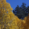 Aspen leaves were turning yellow and orange. Lovely.