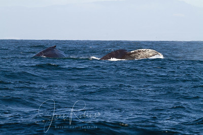 More whales in the deeper water. Getting very rocky out there.