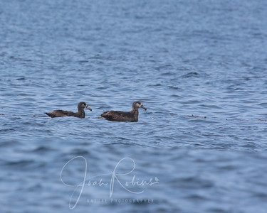 He and she (Albatross) I would guess