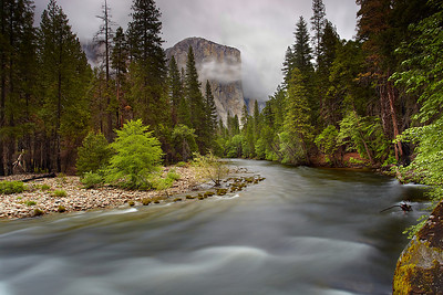 I liked this pleasing curve in the Merced River with El Capitan looming in the distance, so I returned when there was lots of mist, showing how tall El Cap really is! A 30-second exposure smoothed out the flowing water to show how peaceful it felt on this misty afternoon.  I won't mention about how I had to hang off of the edge of a burned stump for a half-hour to get this open view.  It took a while to get the soot off my hands!