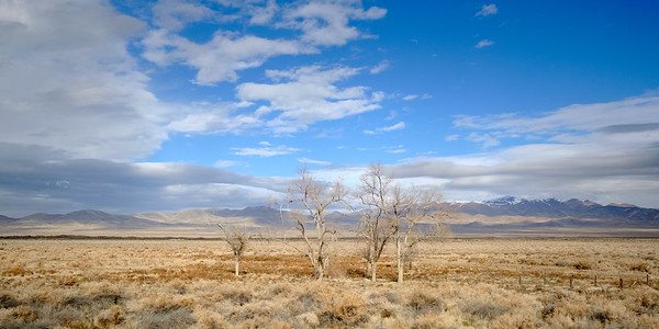 It wasn't until I looked at these pictures later that I noticed a hawk perched on these lone trees in the middle of the Nevada scrub.