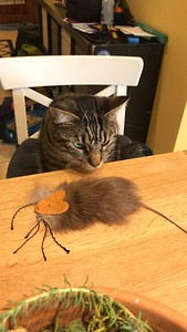 Ron receives the cat's Christmas present: a real-fur toy! What a treat!