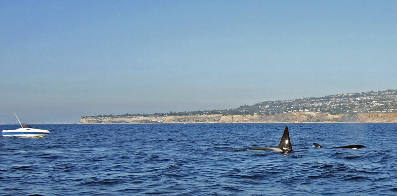 Male on the left; Palos verdes in the background