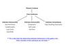 Phylum Cnidaria taxonomy