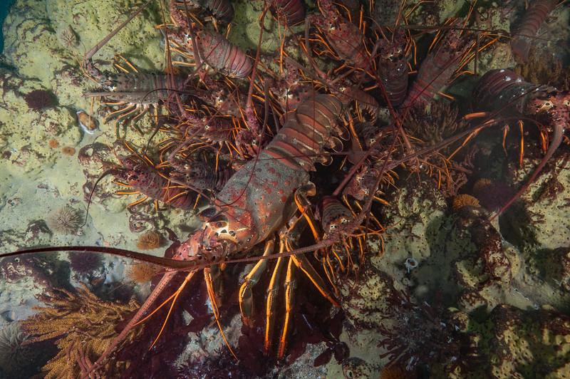 Lobsters on a pylon