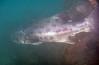 Spotting GSB HERART009<br /> Kiko<br /> MP GSB 1<br /> Fishbowl, Hermosa Artificial Reef, Los Angeles County, California
