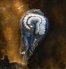 Syllid worm