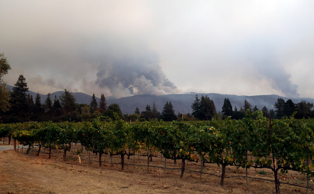 . Vineyards are lined up as a wildfire burns on a mountaintop Monday, Oct. 9, 2017, in Napa, Calif. (AP Photo/Marcio Jose Sanchez)
