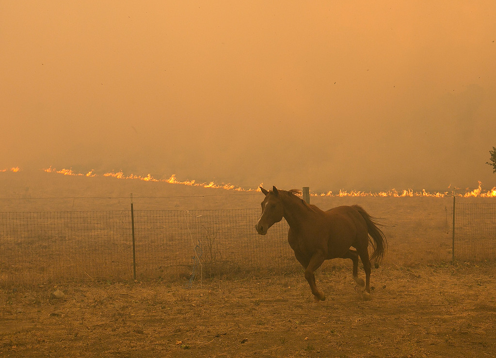 . A horse runs from the flames from a massive wildfire, Monday, Oct. 9, 2017, in Napa, Calif. (AP Photo/Rich Pedroncelli)