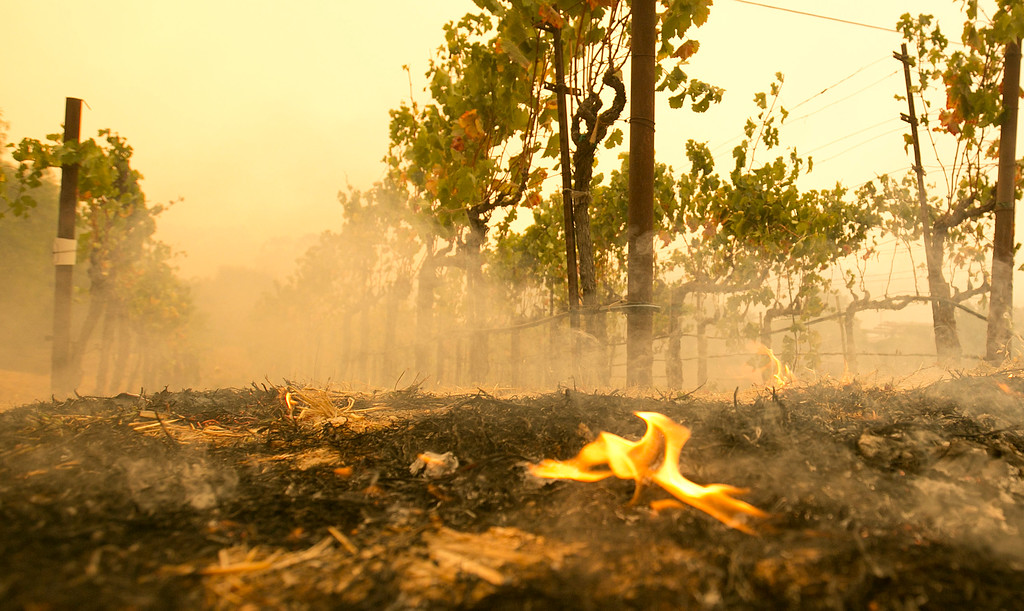 . A small flame is all that remains from the flames that burned to the edge of the Robert Sinskey Vineyard, Monday, Oct. 9, 2017, in Napa, Calif. Wildfires whipped by powerful winds swept through Northern California sending resident on a headlong flight to safety through smoke and flames as homes burned. (AP Photo/Rich Pedroncelli)