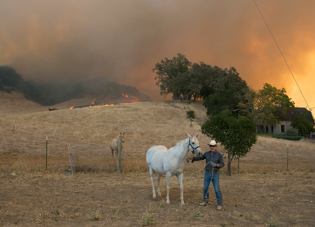 . A man leads a horse away the flames from a massive wildfire, Monday, Oct. 9, 2017, in Napa, Calif. (AP Photo/Rich Pedroncelli)