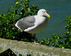 There are no predators on the island, so it is a nesting site for seagulls - lots and lots of Jail Birds.