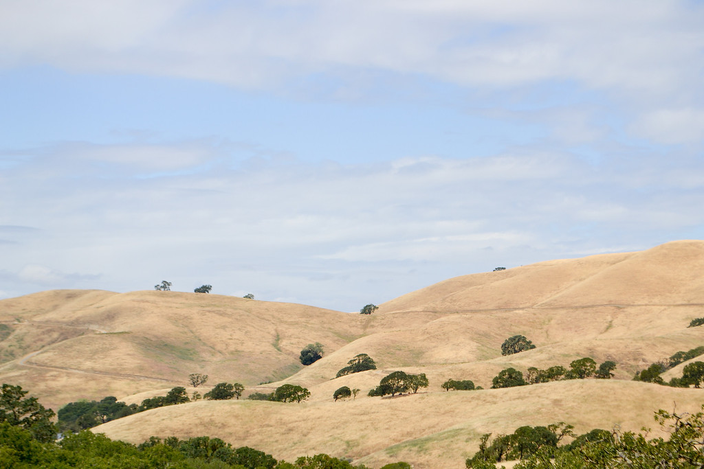 On the distant hill is the fire road..... this is taken from Wooded Path.<br /> (EBRPD - Del Valle)