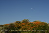 Moonset, Antelope Valley CA (2)