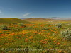 Antelope Valley Poppy Reserve, CA (7)