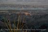 Dawn Anza-Borrego Desert SP fm Mine Wash Rd (5)
