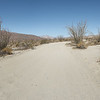 Road in Desert Garden