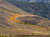 Aspen ribbon, Mammoth Lakes CA (7)