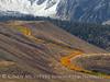Aspen ribbon, Mammoth Lakes CA (6)