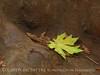Henrky Cowell Redwoods State Park CA (62)